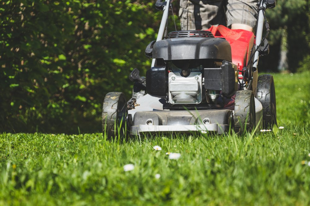 Let grass clippings stay on the yard or you  can use it as mulch.