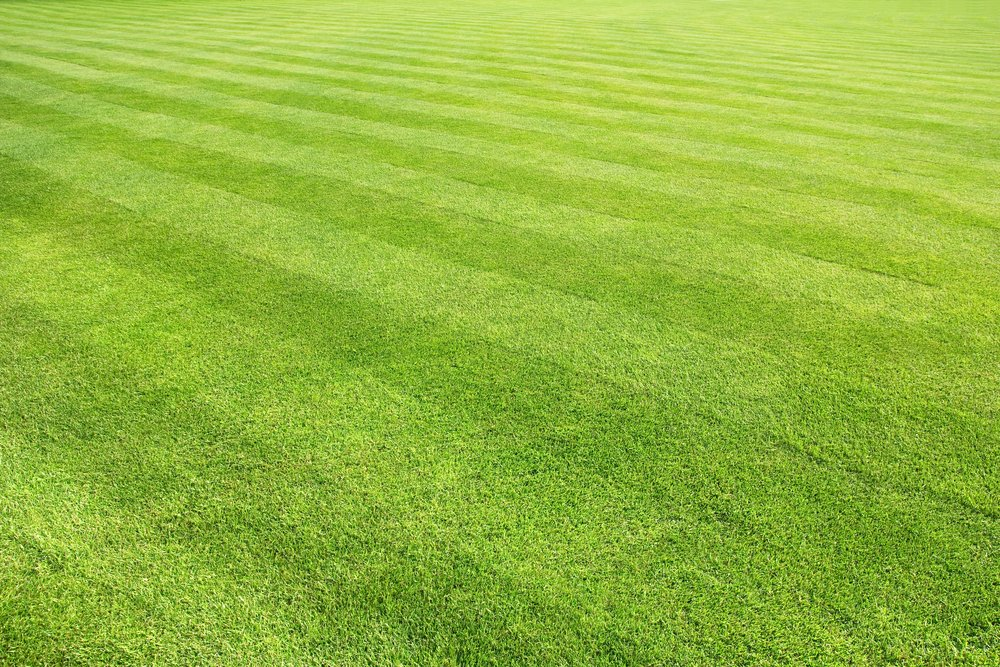 A freshly mowed lawn with alternating stripes that you see when using the lawnmower in a specific pattern.