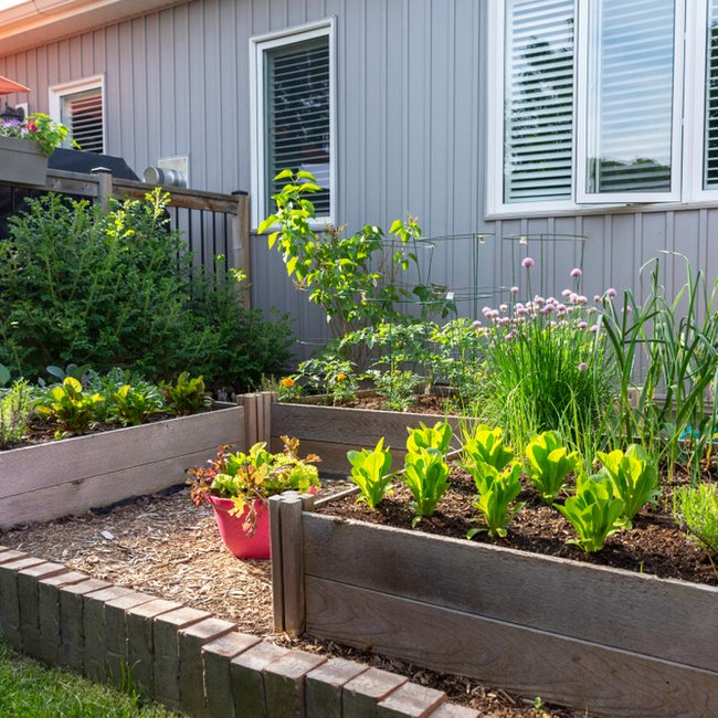 Three different raised bed gardens next to each other in front of a house