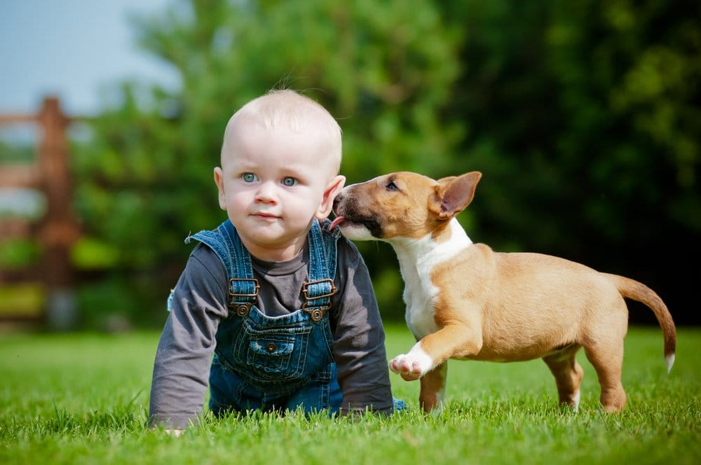 A toddler and a dog play on the lawn