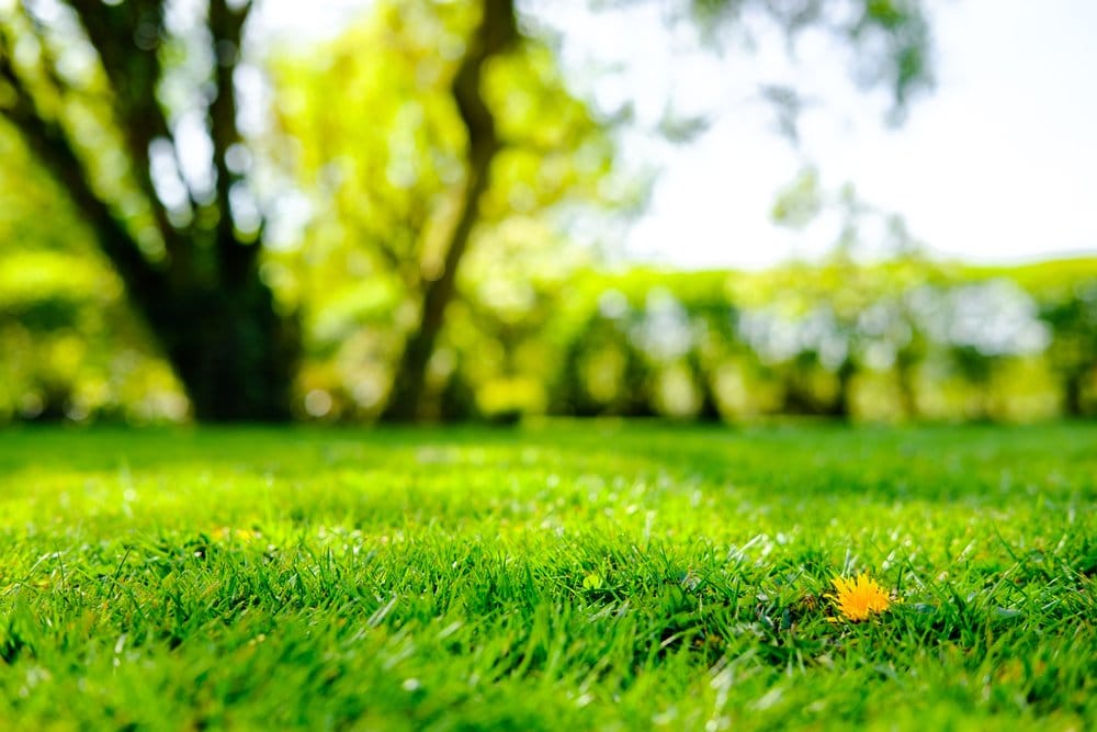 A beautiful green lawn in the foreground with the sky and a tree blurred out in the background.