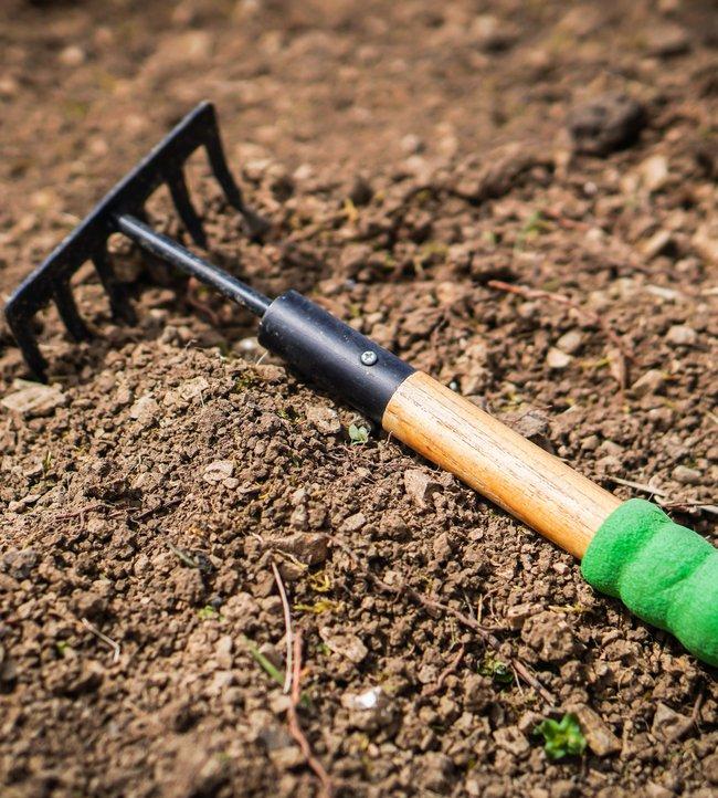 A rake sitting in soil