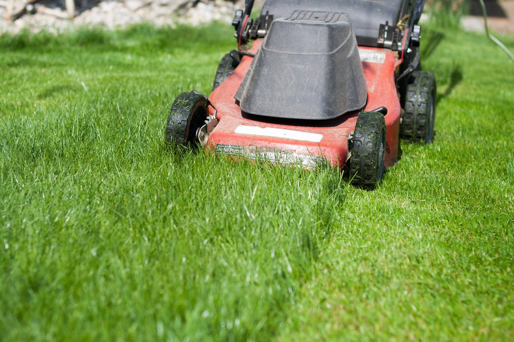 A red push-style lawn mower in action