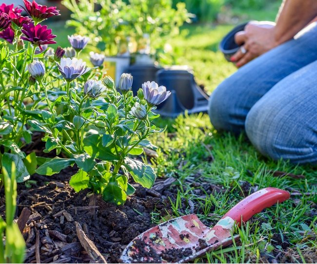 A woman kneeling in the grass planting flowers