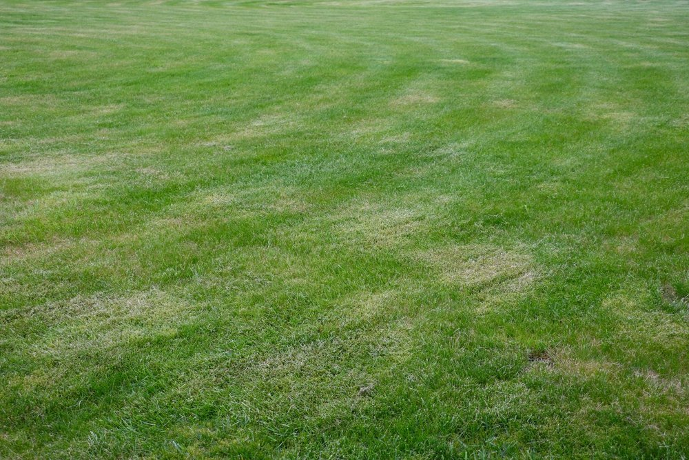 A patchy lawn