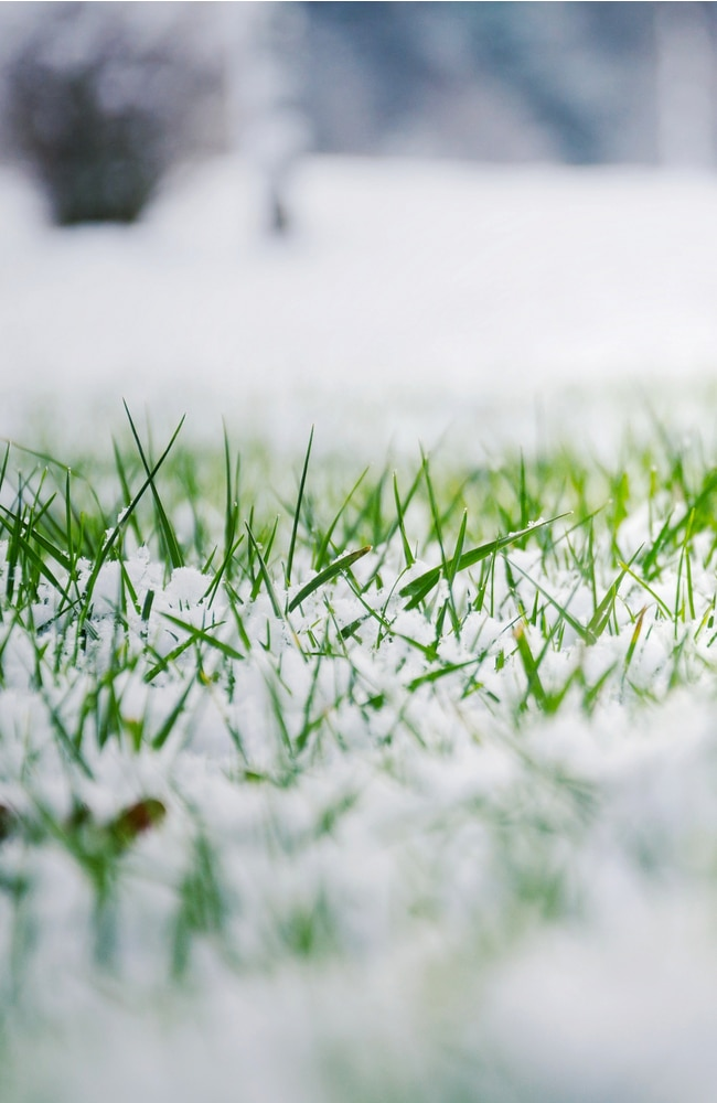 Snow is also a form of water to the lawn