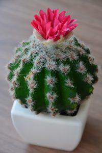 soil for cactus