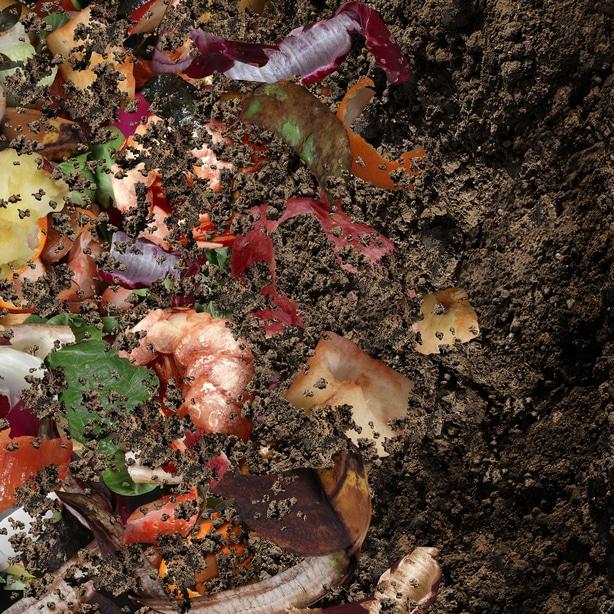 Compost makes for excellent soil amendments