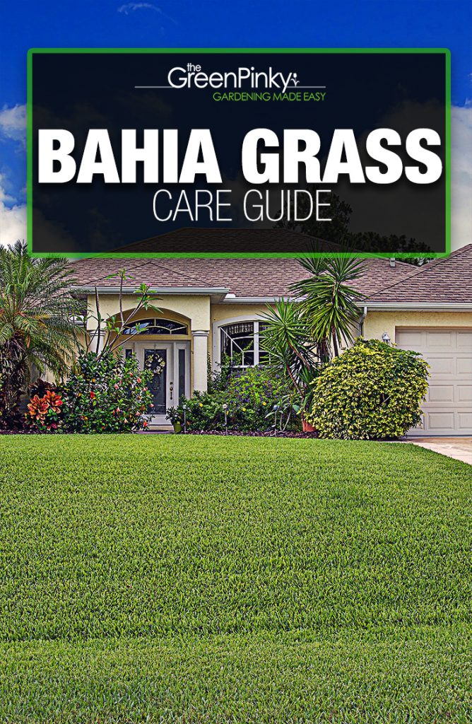 Southern lawn maintenance requires the guidance from a care guide