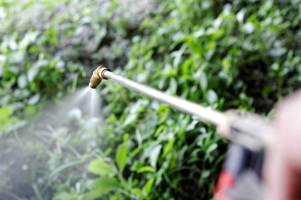 Someone spraying preventative, pre-emergent herbicide to prevent weeds