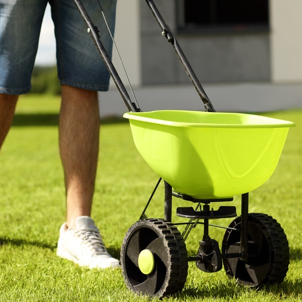 Test your soil and spread fertilizer appropriately to let it grow healthy.
