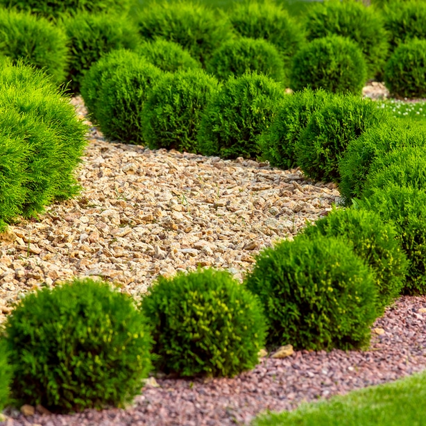 Stone mulch can add a very interesting and moddern appearance to a garden.