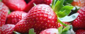 A guide to properly harvest and store strawberries