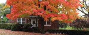 Raising a healthy sugar maple tree does not have to be difficult with a guide