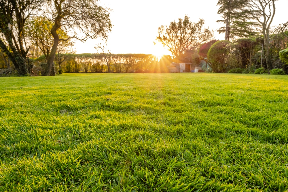 Sun rises over a yard with long grass that needs to be mowed