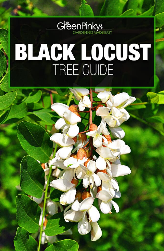 Proper watering, fertilization, and sunlight is necessary to help your tree thrive.