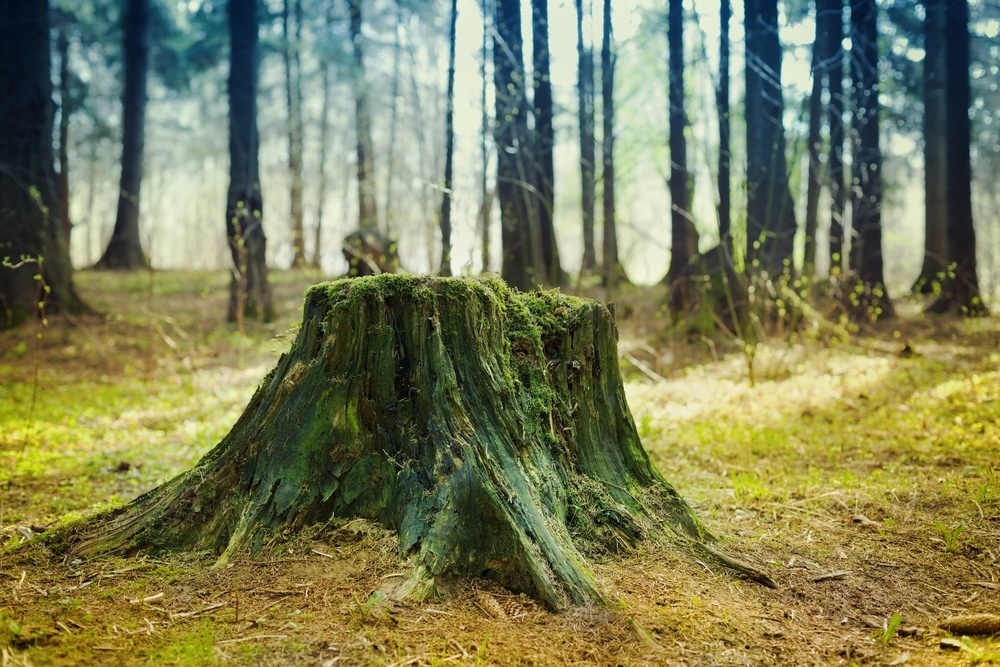 How to Rot Out a Tree Stump