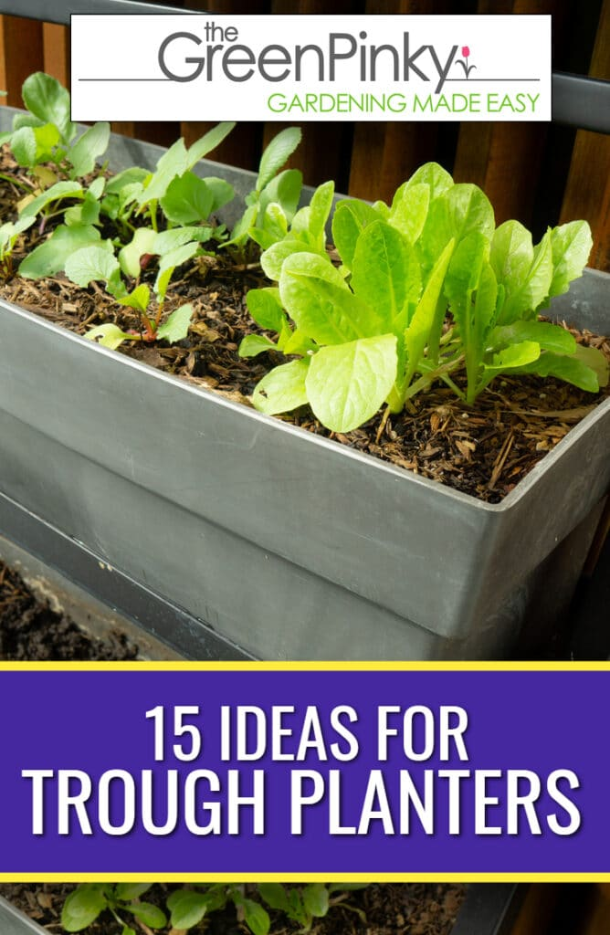 Ideas for trough planters to make a beautiful statement in your garden