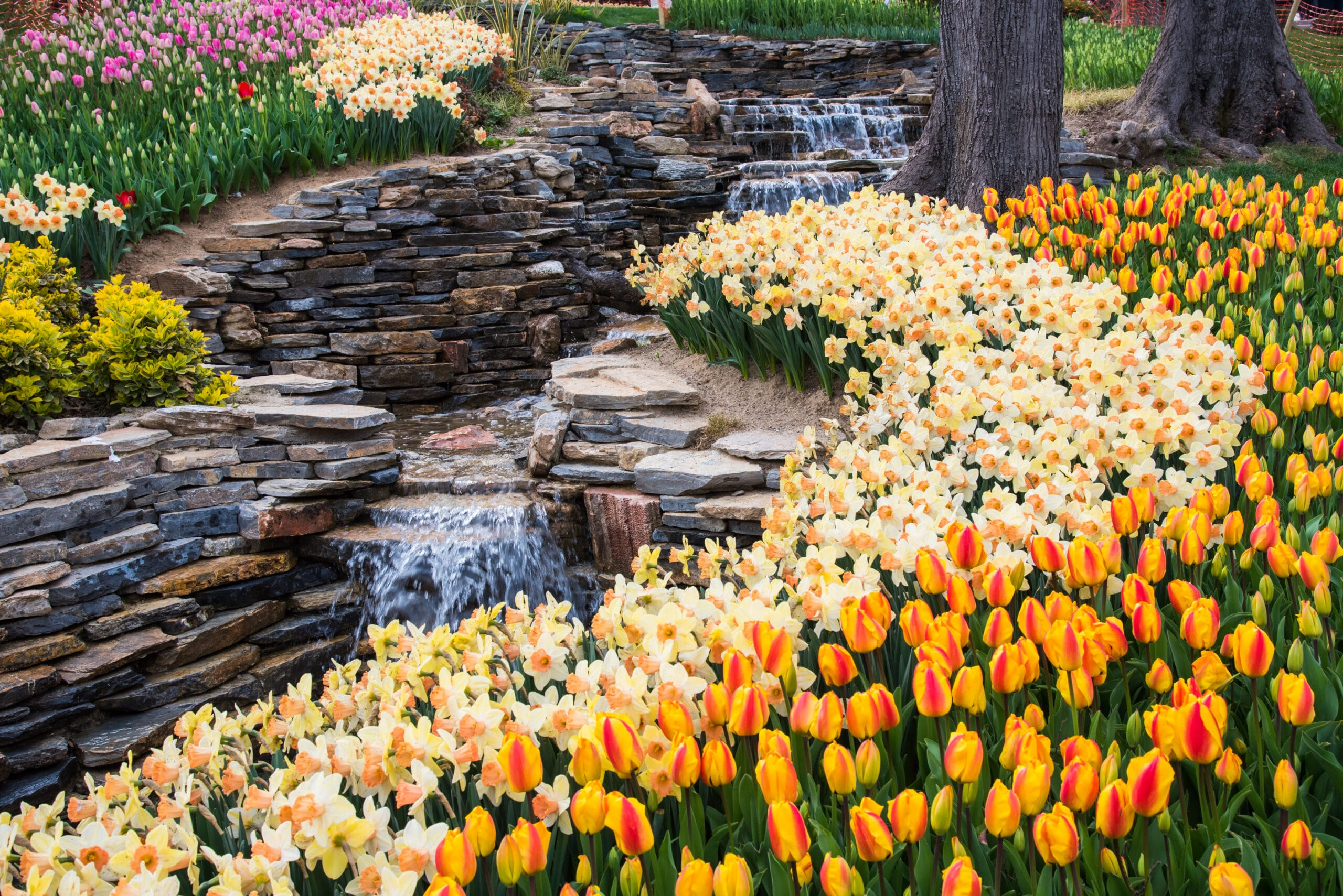 14 of the Best Tulip Festivals in The World