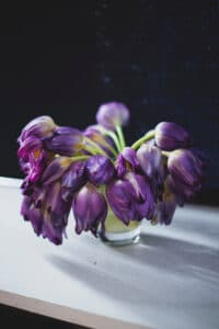 Drooping tulips can be fixed with the tricks that follow in this guide