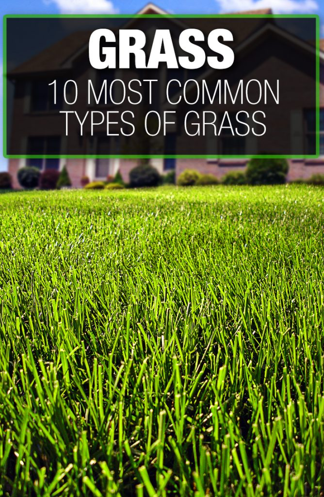 Identifying the type of grass will be reviewed in this guide.