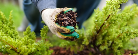 Different Types of Mulch: The Advantages of Each