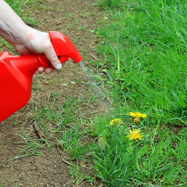 Vinegar is an homemade solution to killing weeds