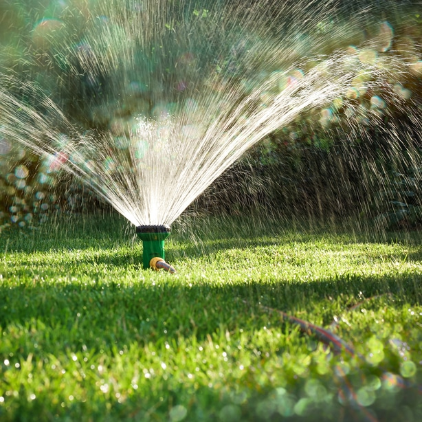 Bermuda requires the proper irrigation to grow optimally.