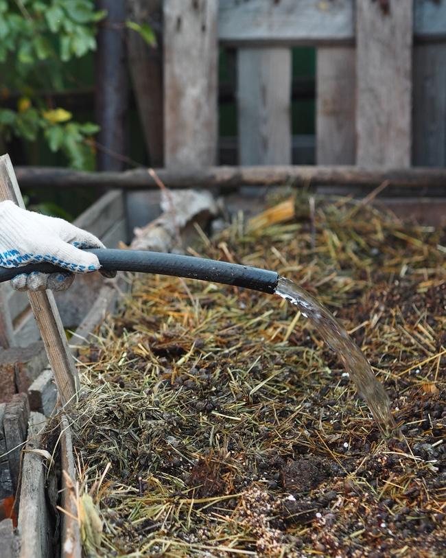 Watering compost bin to ensure proper moisture.