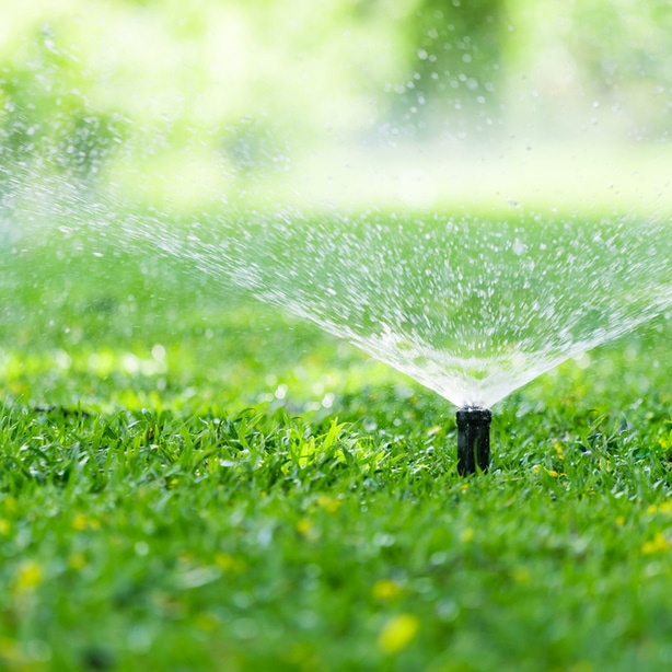 Water with sprinklers is essential to preventing a dead lawn
