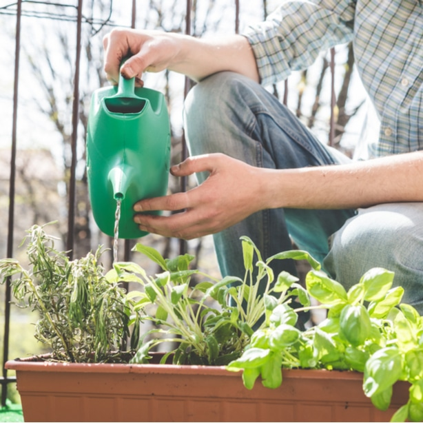 Watering too much or too little are both bad