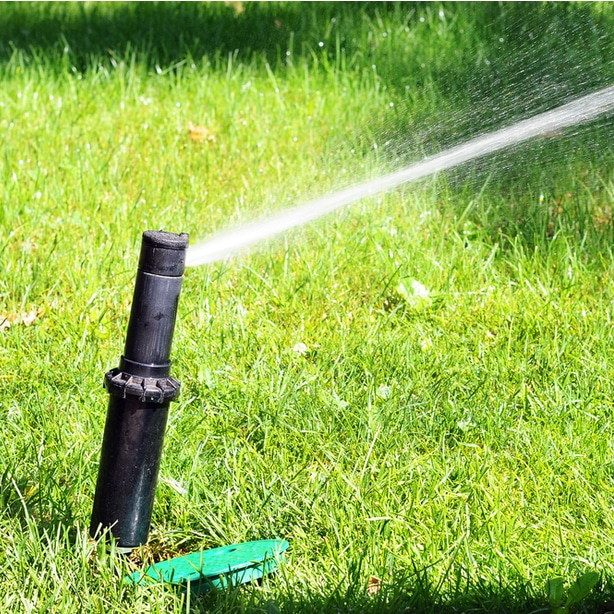 Appropriate watering is necessary for optimal growth.