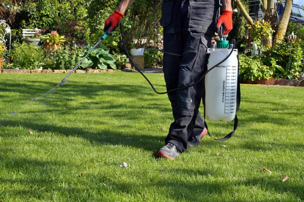 A man spraying a lawn with weed killers