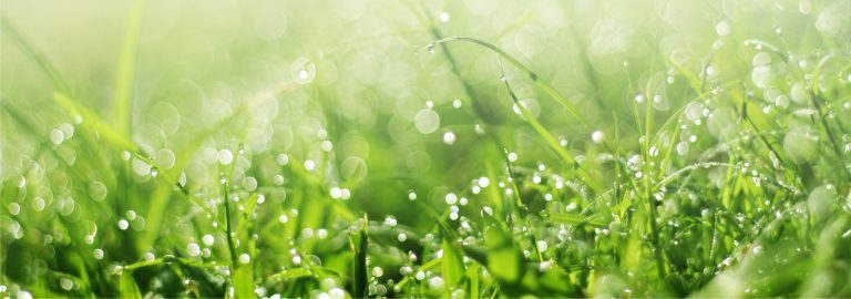 Watering your grass the right amount is paramount to a grass's health