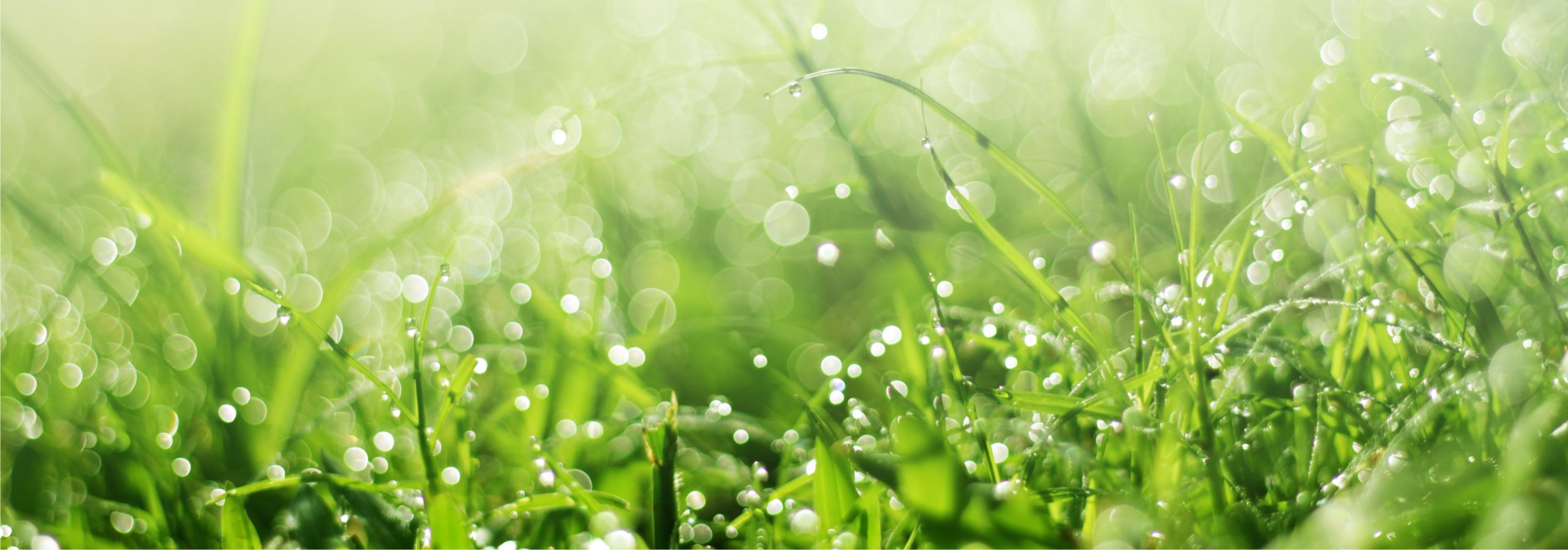 Watering Your Lawn – How and When