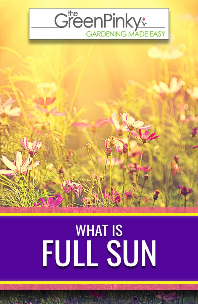 Full sun has a very specific definition in gardening