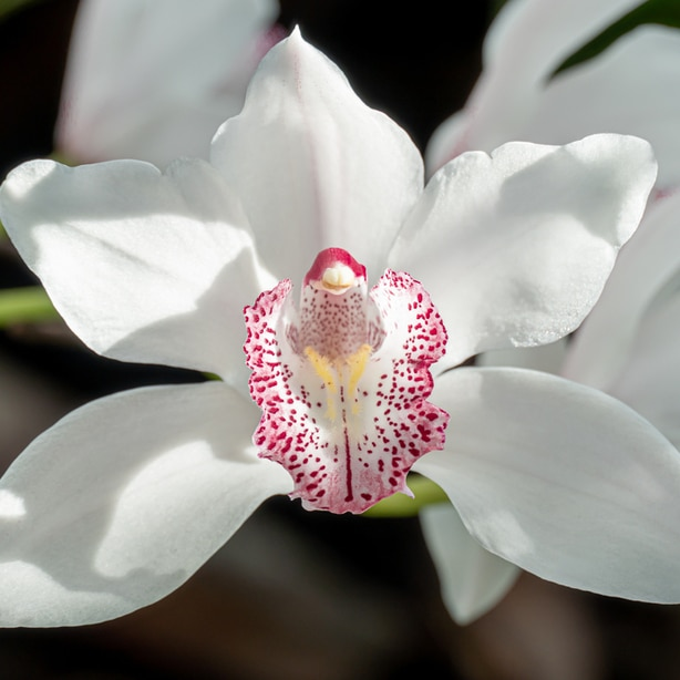White orchid with great floral bloom
