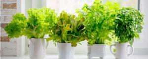 Indoor herb garden with herbs receiving sun on windowsill