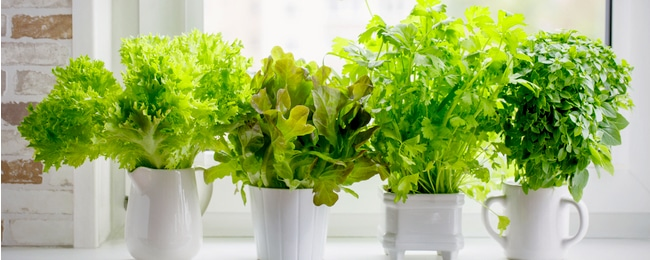 Herb Gardens: Why You Need One and How to Start One