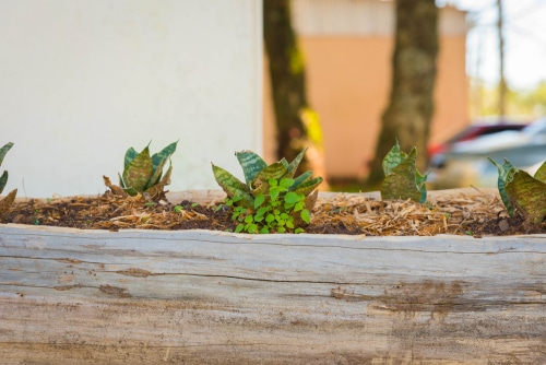 Wooden trough planter is a stylish idea for growing plants