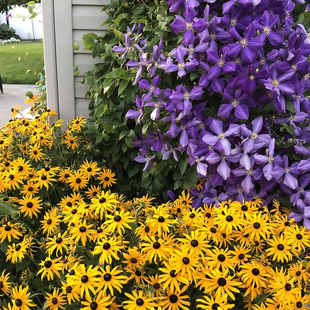 They will create vibrant yellow flowers that are great for creating contrast