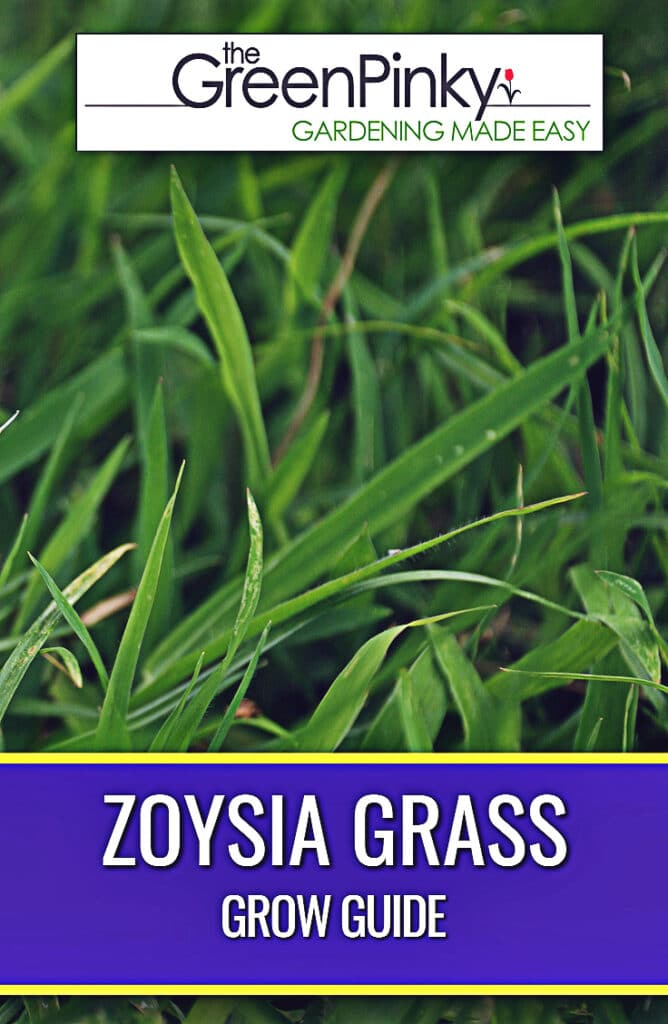 Maintaining a zoysia lawn requires proper care from a guide